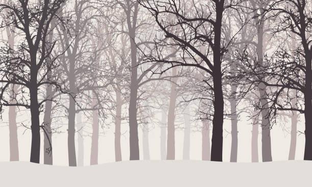wektorowa ilustracja zimowego lasu bez liści ze śniegiem i mglistym tłem - gałąź część rośliny stock illustrations