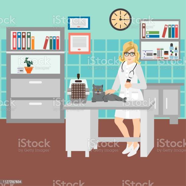 Vector illustration of a woman veterinarian in the clinic examining a vector id1127297834?b=1&k=6&m=1127297834&s=612x612&h=jzyr7kr6z0peedjrtxrr6cc1exnaihmww51dwe0qyga=
