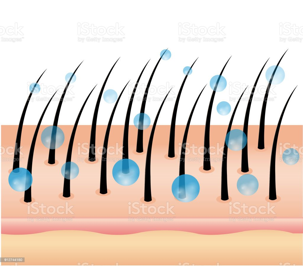 Best Hair Follicle Illustrations  Royalty-free Vector Graphics  U0026 Clip Art