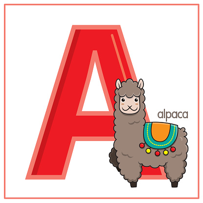 Vector illustration of Alpaca isolated on a white background. With the capital letter A for use as a teaching and learning media for children to recognize English letters Or for children to learn to write letters Used to learn at home and school.