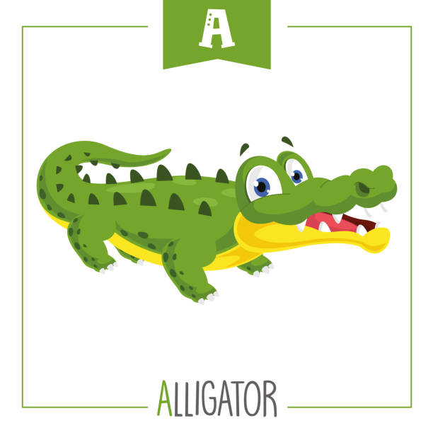 Vector Illustration Of Alphabet Letter A And Alligator Vector Illustration Of Alphabet Letter A And Alligator alligator stock illustrations