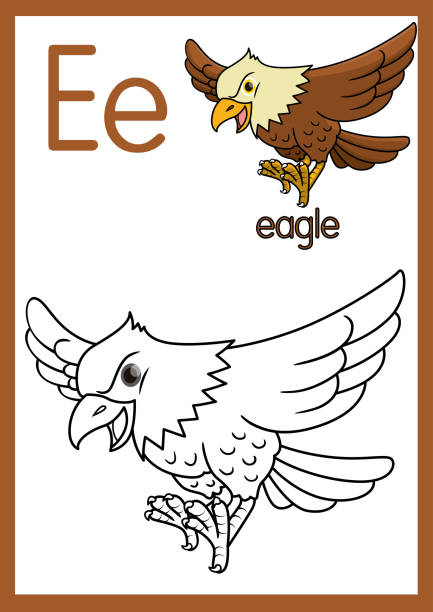 illustrations, cliparts, dessins animés et icônes de illustration vectorielle d'un aigle avec l'alphabet e pour les enfants pratiquent abc sur la taille de papier a4 prêt à imprimer. - enseignant(e) en maternelle