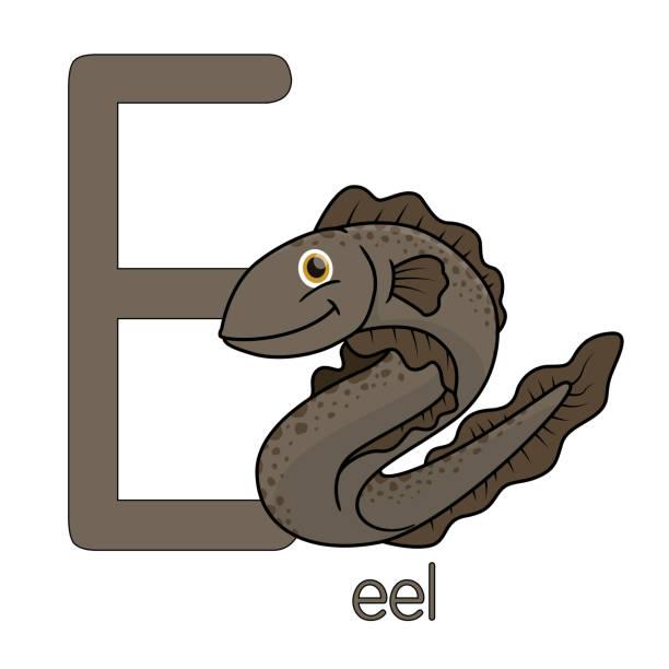 illustrations, cliparts, dessins animés et icônes de illustration de vecteur d'une anguille isolée sur le fond blanc. avec la majuscule e pour l'utiliser comme matériel didactique laissez les enfants apprendre à connaître l'alphabet anglais. - enseignant(e) en maternelle