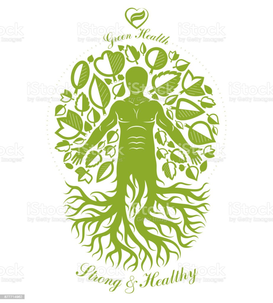 Vector illustration of athletic man depicted as continuation of tree. Strong heart is good health, wellness center abstraction. vector art illustration