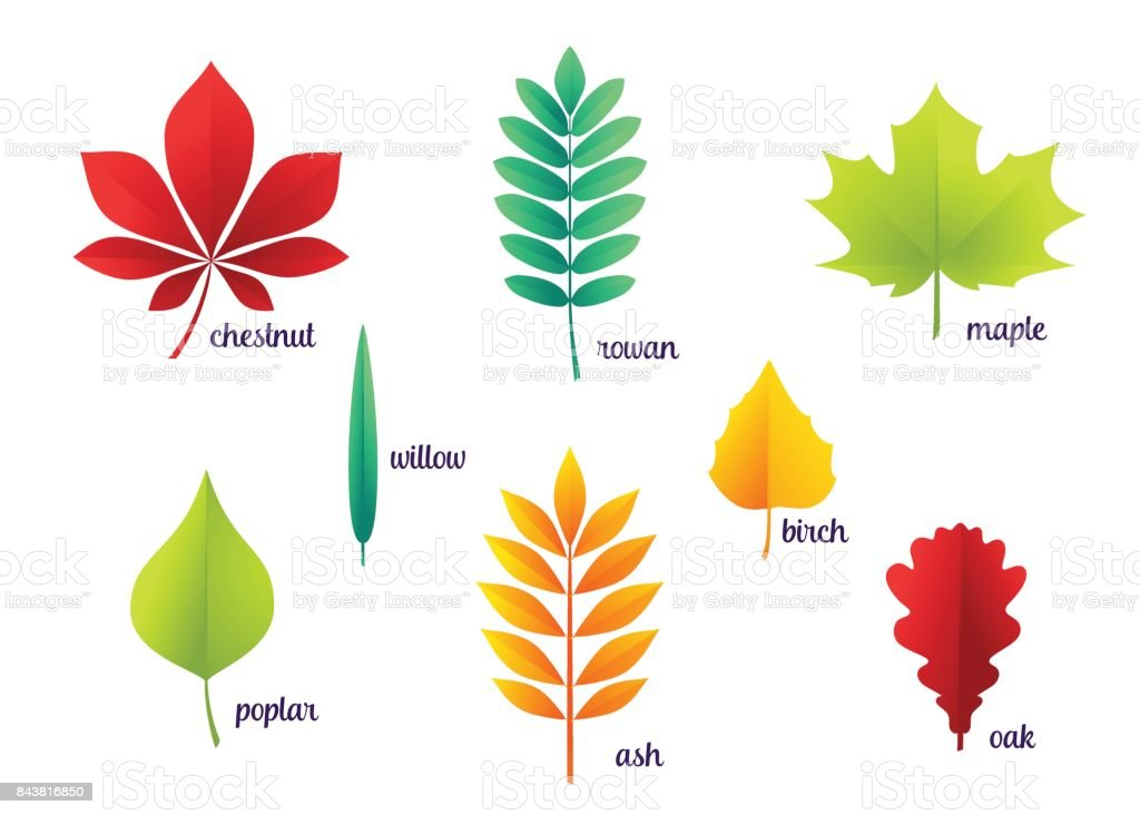 Vector illustration of autumn leaves vector art illustration