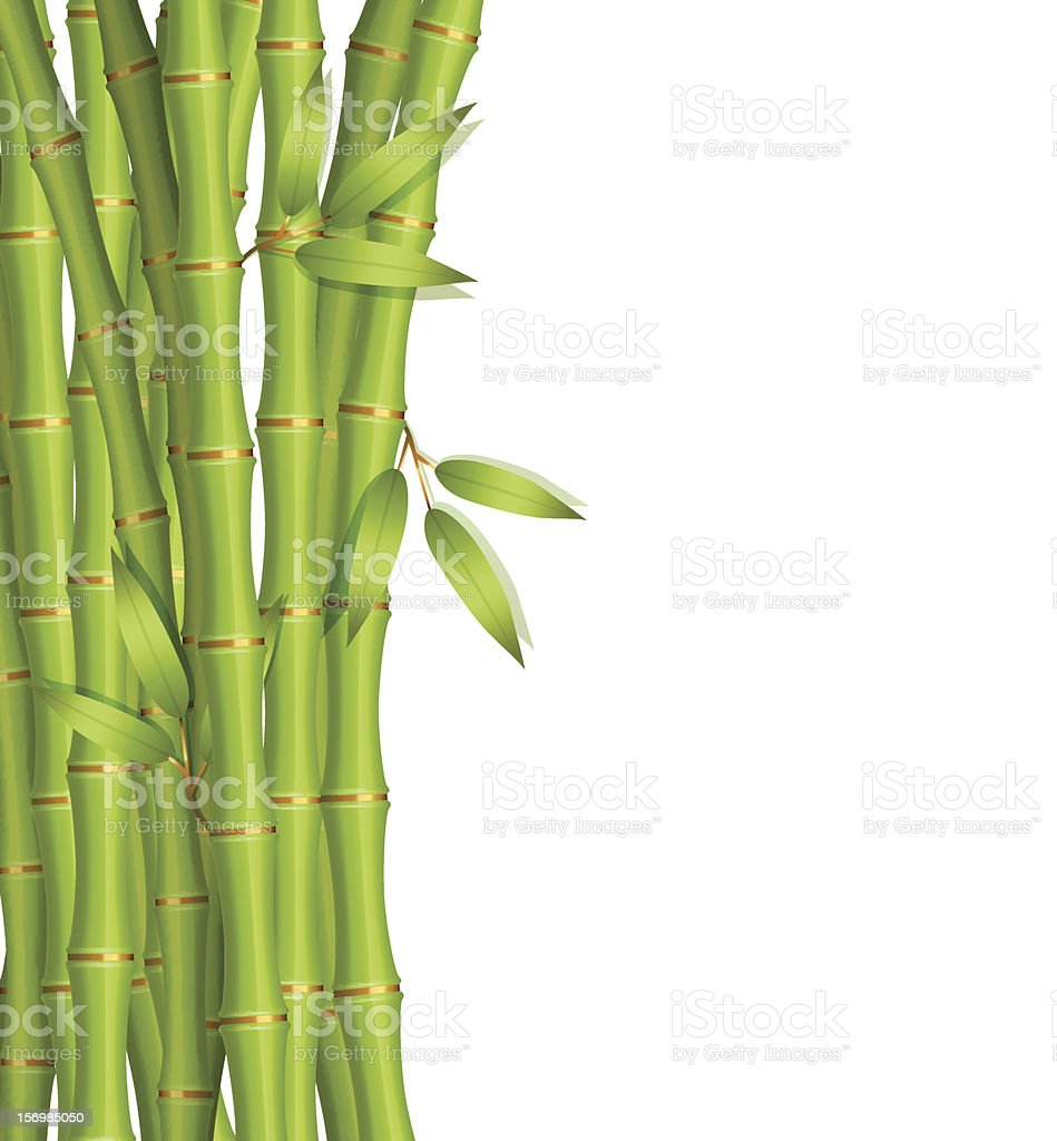 Vector illustration of Bamboo royalty-free stock vector art
