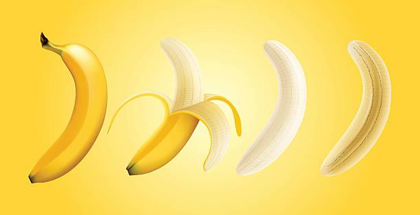 Vector illustration of banana peeled banana and slice banana, transparent vector art illustration