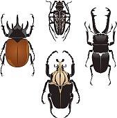 Vector illustration of beetles