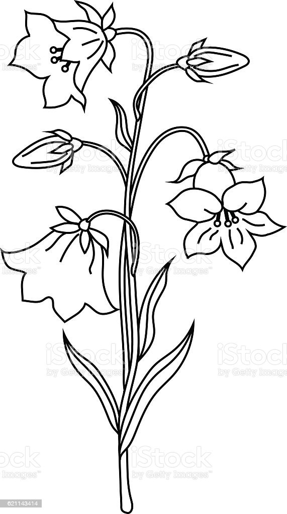 Vector illustration of bell flowers vector art illustration