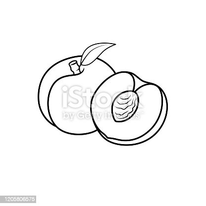 Vector illustration of black and white apricot vector isolated on white background for children colouring book.