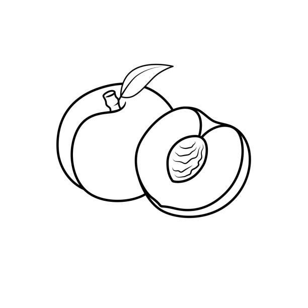 illustrazioni stock, clip art, cartoni animati e icone di tendenza di vector illustration of black and white apricot vector isolated on white background for children colouring book. - pesche bambino