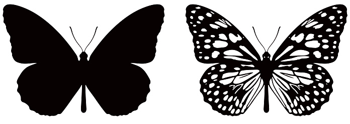 Vector illustration of butterfly on white background. There are two versions, black shape and black and white