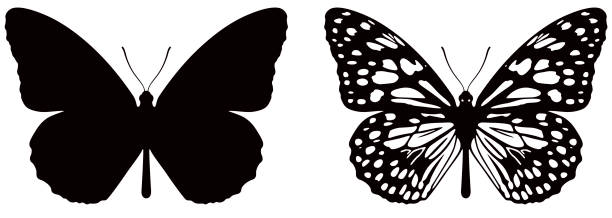 Vector illustration of butterfly on white background. There are two versions, black shape and black and white Carefully labeled and grouped in layers panel. Easy to select and edit butterfly stock illustrations