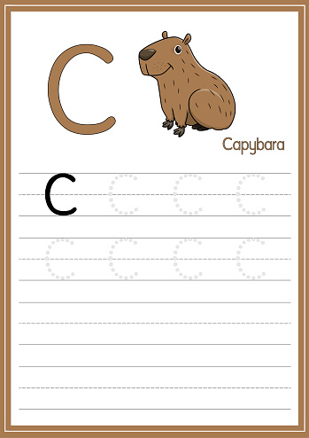 Vector illustration of capybara isolated on a white background. With the capital letter C for use as a teaching and learning media for children to recognize English letters Or for children to learn to write letters Used to learn at home and school.