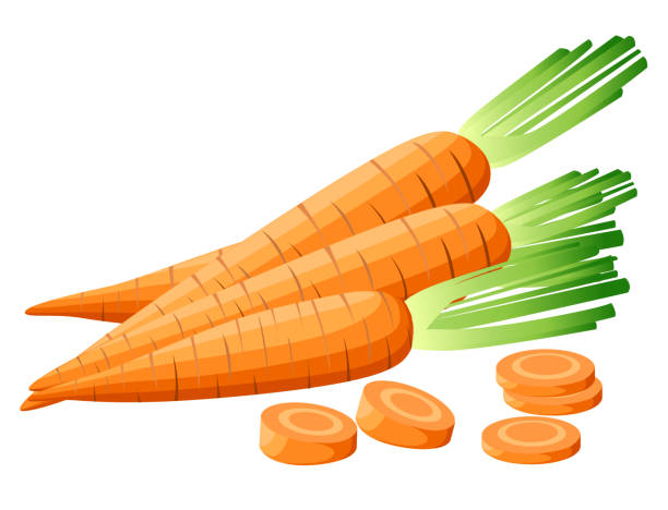 ilustrações de stock, clip art, desenhos animados e ícones de vector illustration of carrot with tops. sliced carrots. pieces of carrots. carrots with leaves and carrot slices. web site page and mobile app design detailed vegetarian food sketch. - cenoura