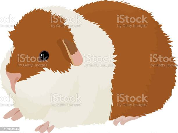 Vector Illustration Of Cartoon Guinea Pig Stock Illustration - Download Image Now