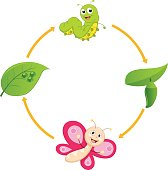 Vector Illustration of Cartoon Life Cycle of Butterfly