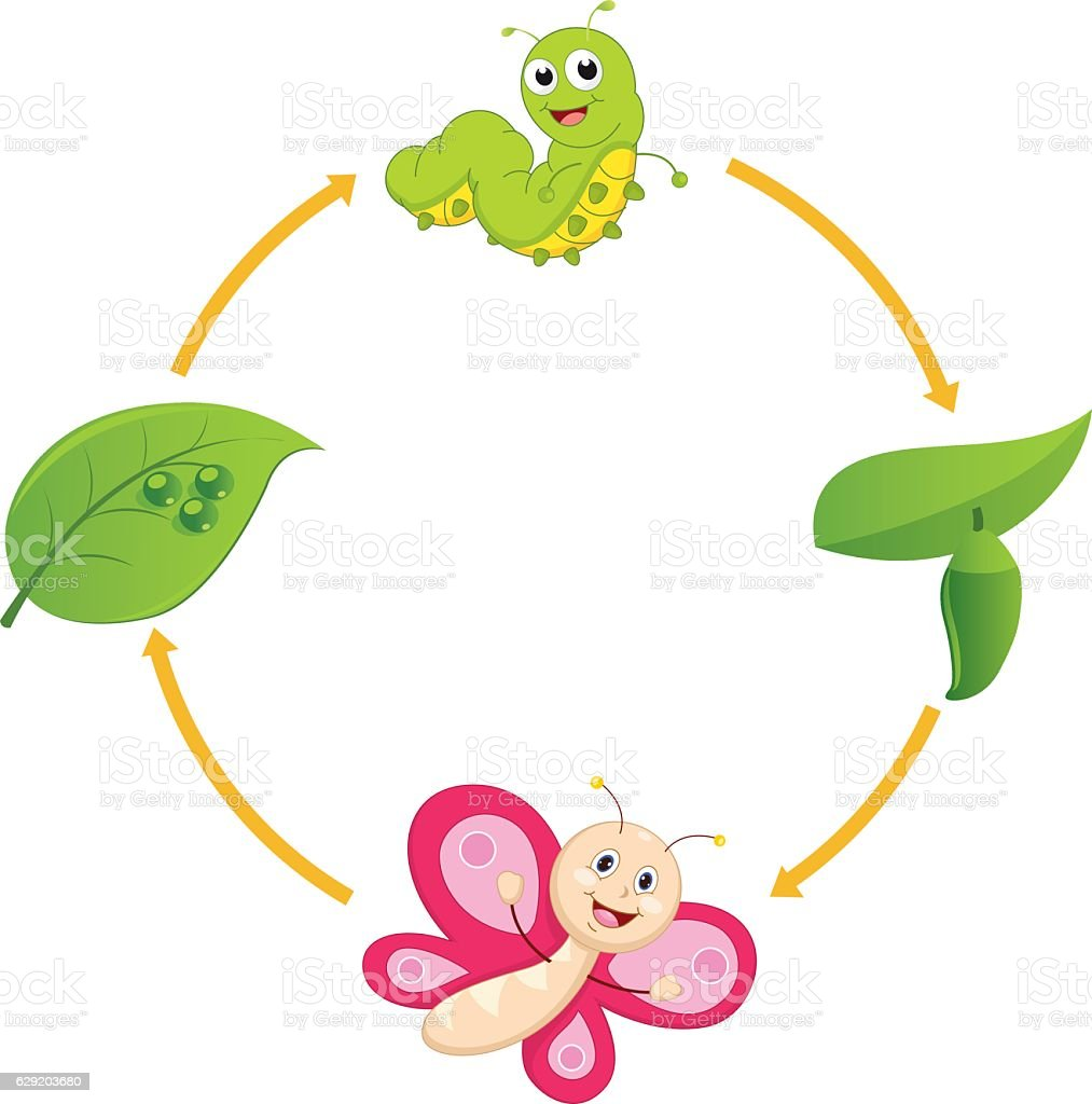 Vector Illustration of Cartoon Life Cycle of Butterfly vector art illustration