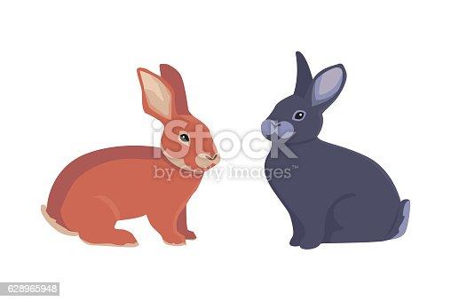 vector illustration of cartoon rabbits