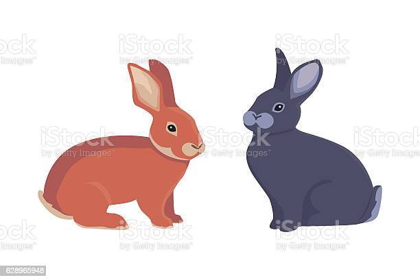 Vector illustration of cartoon rabbits different breeds fine bunnys vector id628965948?b=1&k=6&m=628965948&s=612x612&h= ovglvrgzpzxseuuh2u4m92jlv1hetjemyeeoef4r4o=
