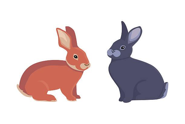 vector illustration of cartoon rabbits different breeds. fine bunnys for - kaninchenbau stock-grafiken, -clipart, -cartoons und -symbole