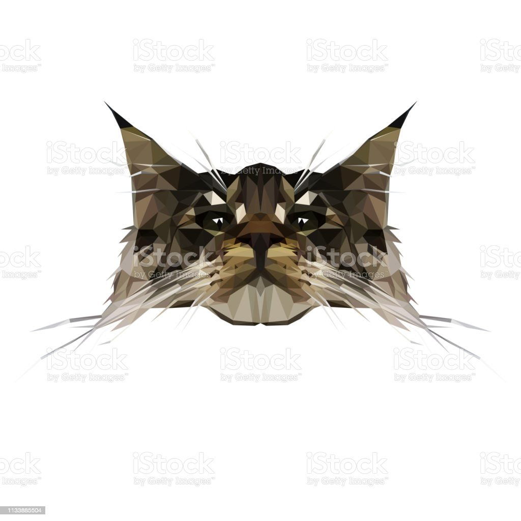 Vector Illustration of Cat Breed Maine Coon in Low Poly Style....