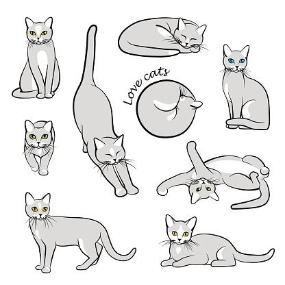 Vector illustration of cats