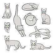 Big vector set of cats in different activities