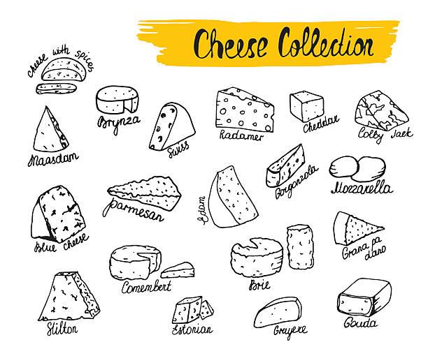 ilustrações de stock, clip art, desenhos animados e ícones de ilustração vetorial de tipos de queijo na mão desenhada estilo. - cheese