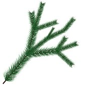 Vector illustration of christmas tree branche