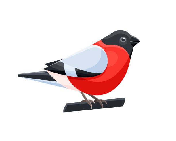 Vector illustration of colorful bullfinch bird on white background Vector Isolated object of bullfinch bird in flat style isolated on background finch stock illustrations