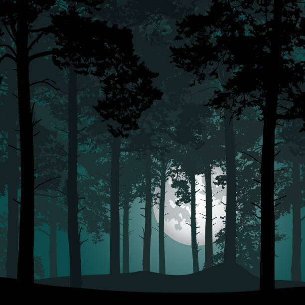 vector illustration of coniferous forest under night sky with stars and moon full moon vector illustration of coniferous forest under night sky with stars and moon full moon woodland stock illustrations