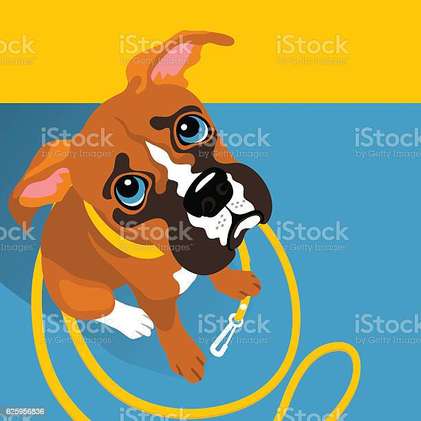 Vector illustration of cute boxer puppy with leash vector id625956836?b=1&k=6&m=625956836&s=612x612&h=jxazlswbavr44c2f j72wrdndcbvcafeqkzrf6bn5 e=
