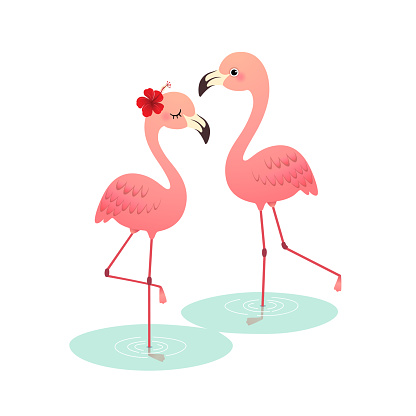 Vector illustration of cute cartoon pink flamingo couple standing on water.
