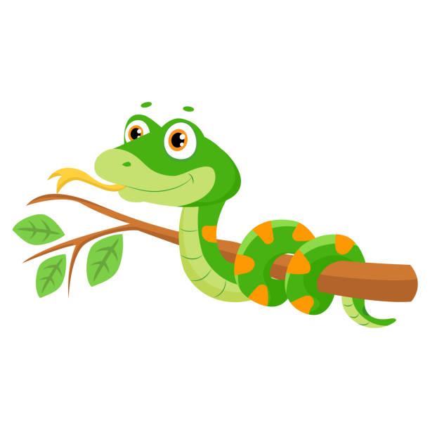 ilustraciones, imágenes clip art, dibujos animados e iconos de stock de ilustración de vector de serpiente linda sonrisa verde en rama. - serpiente