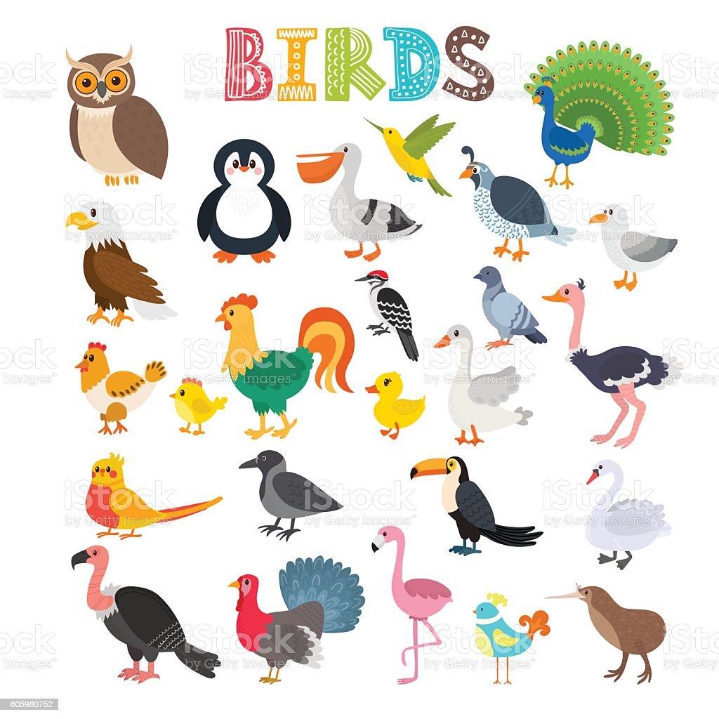 vector illustration of different kind of birds stock vector art