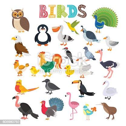 Vector illustration of different kind of birds. Cute cartoon birds. Vector illustration