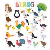Vector illustration of different kind of birds