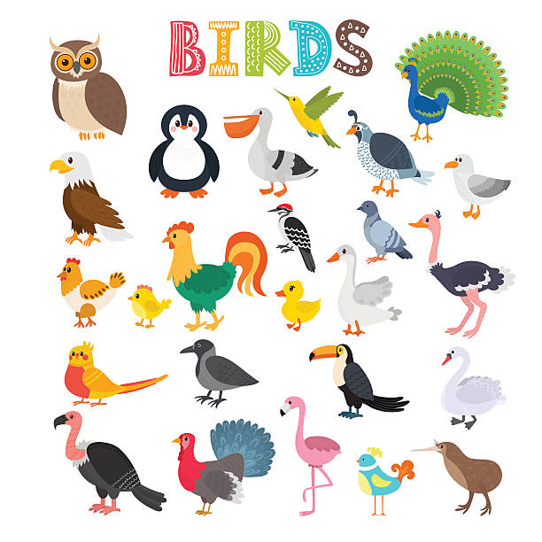 vector illustration of different kind of birds - pfauenfarben stock-grafiken, -clipart, -cartoons und -symbole