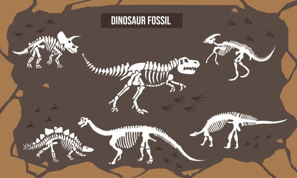 vector illustration of dinosaur fossil - animal skeleton stock illustrations