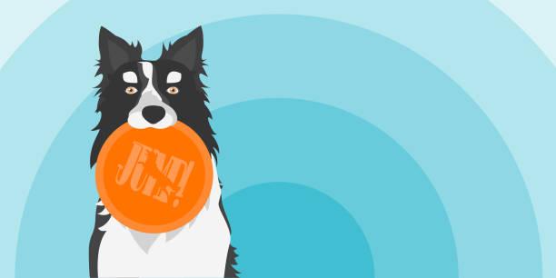 vector illustration der hund hält eine spielzeug. border collie mit scheibe. - collie stock-grafiken, -clipart, -cartoons und -symbole