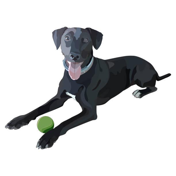 vektor-illustration des hundes. zeiger - vizsla stock-grafiken, -clipart, -cartoons und -symbole