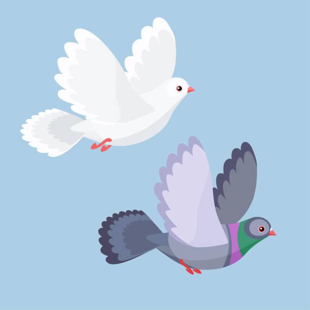 ilustrações de stock, clip art, desenhos animados e ícones de vector illustration of dove and pigeon flying - bills couple