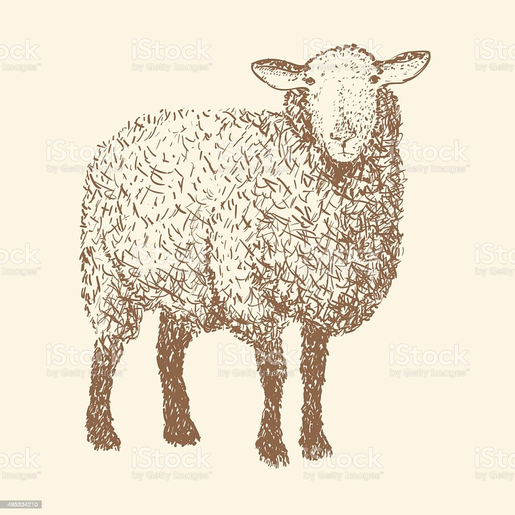 vector illustration of engraving sheep isolated design object sketch drawing royalty free stock