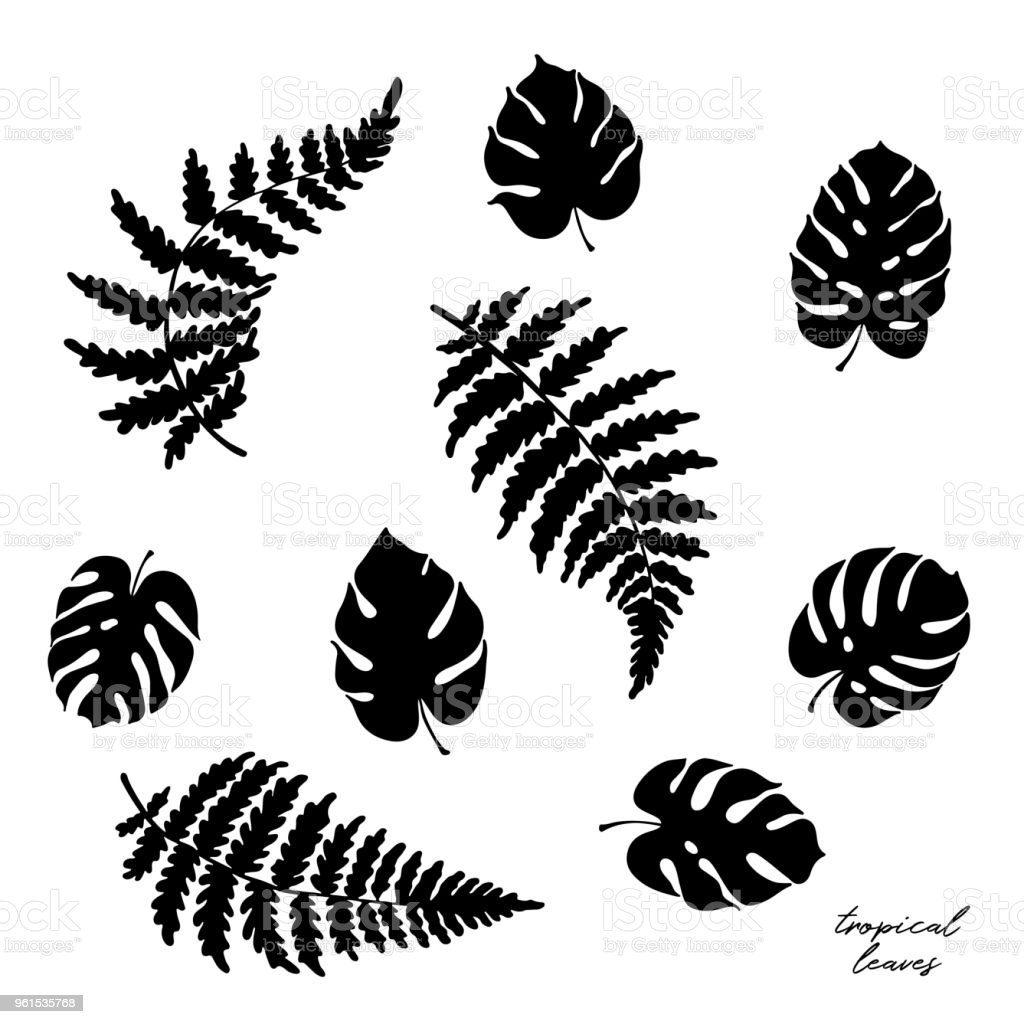 Vector Illustration Of Fern And Monstera Leaves Stock Vector Art