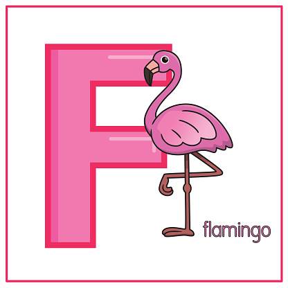 Vector illustration of Flamingo isolated on a white background. With the capital letter F for use as a teaching and learning media for children to recognize English letters Or for children to learn to write letters Used to learn at home and school.