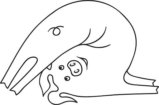 鋤のポーズの halasana に焦点を当てた漫画のブタのベクター イラストですかわいいかわいい面白い文字ですページ