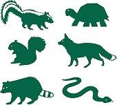 racoon, turtle, skunk, fox, snake, squirel