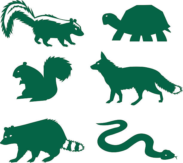 Vector illustration of forest animals racoon, turtle, skunk, fox, snake, squirel skunk stock illustrations