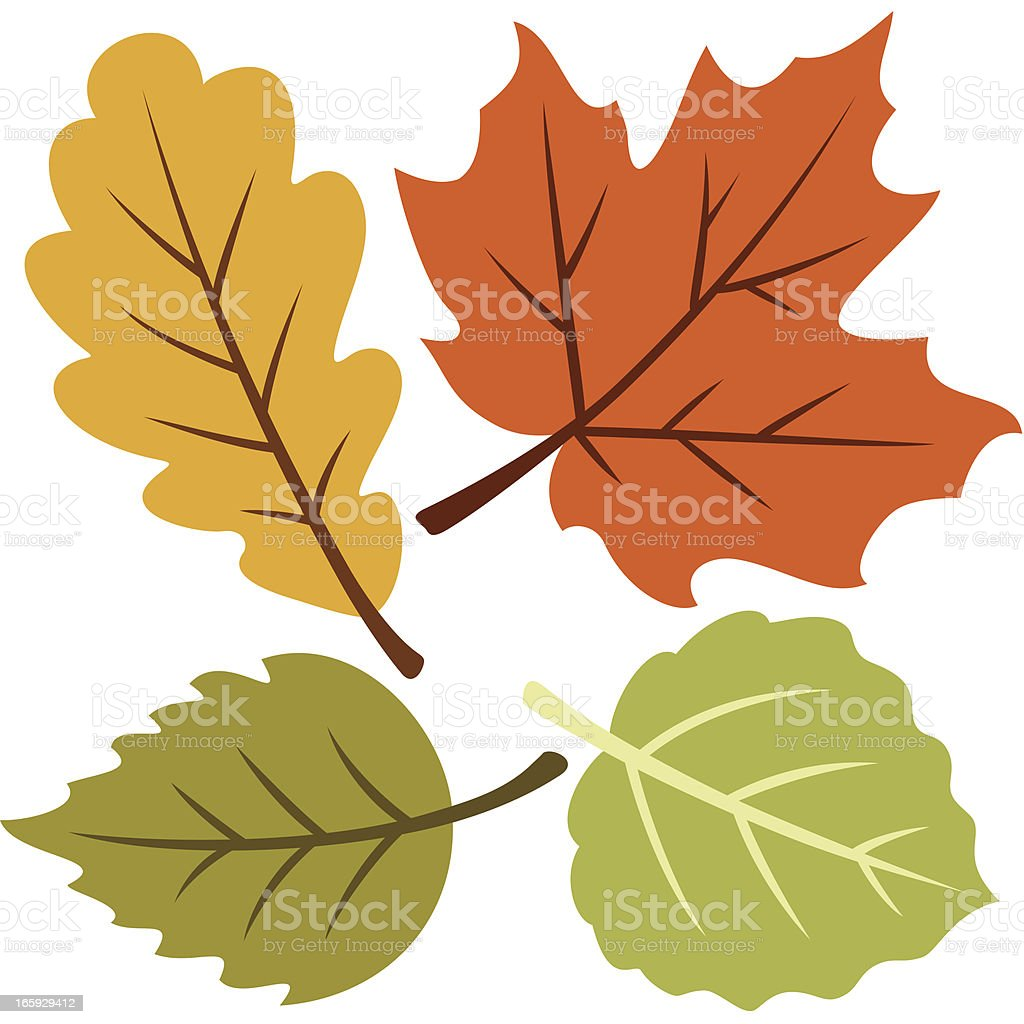 Vector illustration of four autumn leaves royalty-free stock vector art